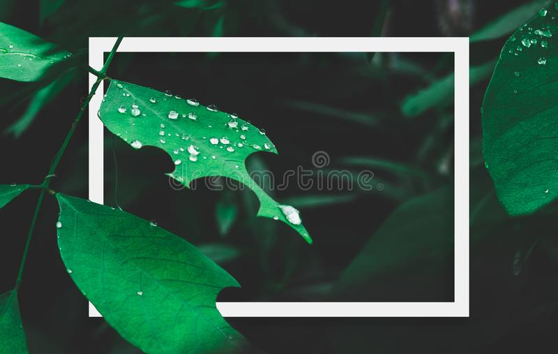 Green leaf with dew and white frame on dark nature background. stock image