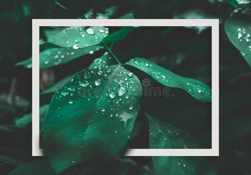 Green leaf with dew and white frame on dark nature background. stock photography