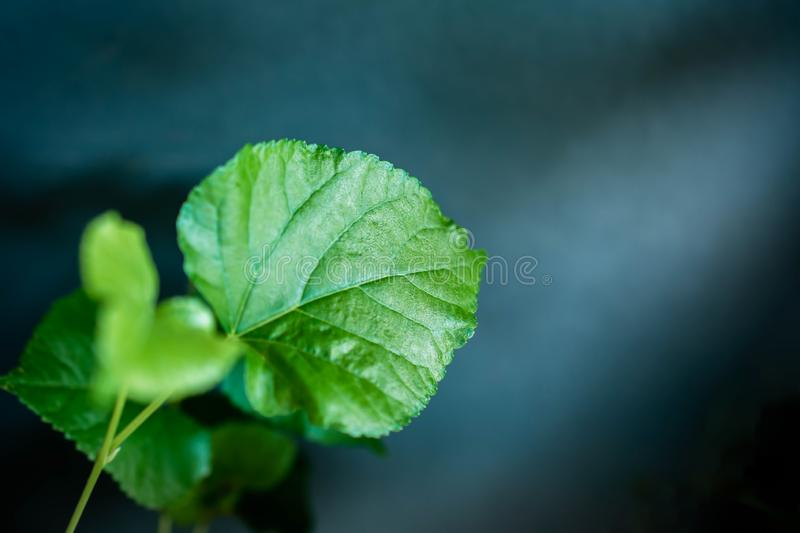 Green Leaf in Dramatic Light. Selective Focus stock photo