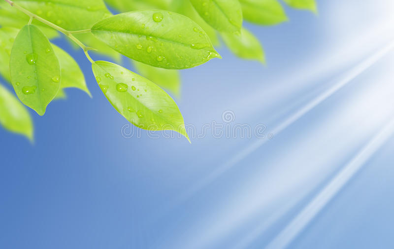 Download Green Leaf With Drops Of Water Stock Image - Image: 20469595