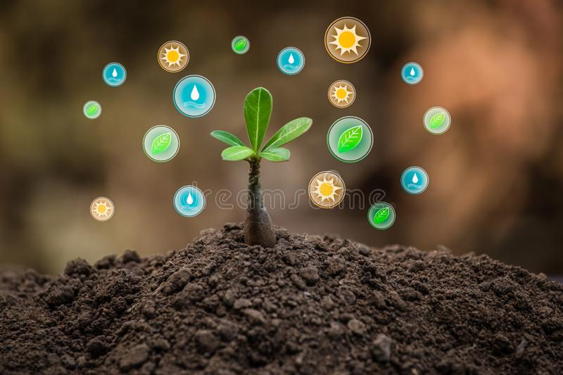 Green leaf with energy icons for renewable stock photos