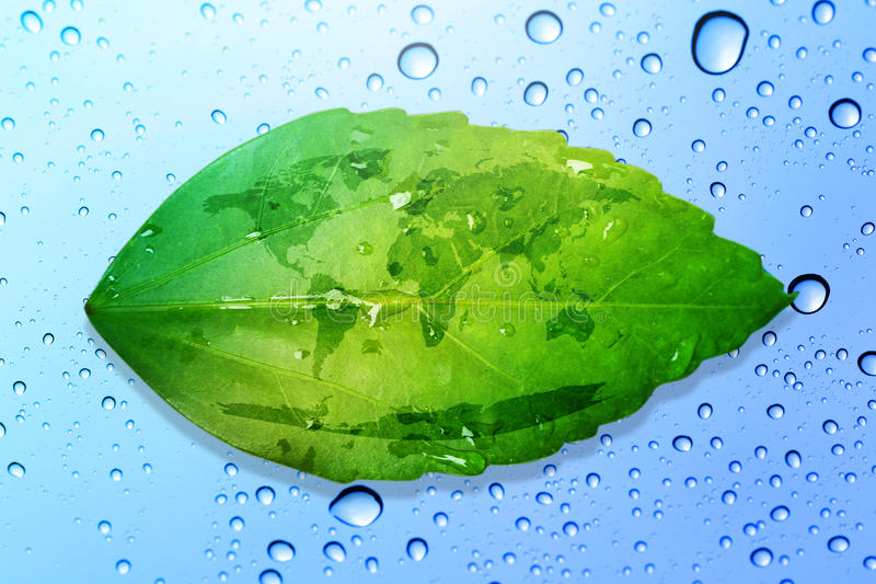 Green leaf environment concept save the earth and water drop bac royalty free stock image