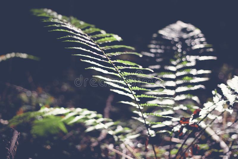 Green leaf fern, abstract natural background and texture in dark. Retro toning stock images