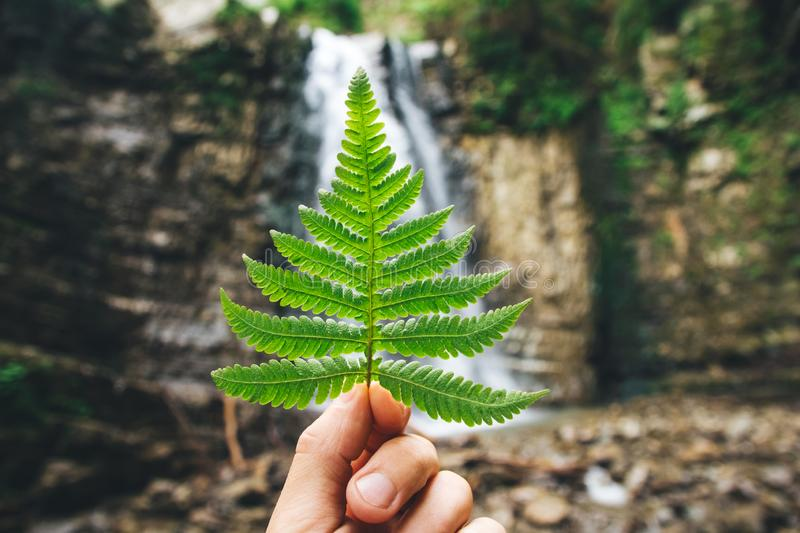 Green leaf of ferns in hand against a background of rocks and a waterfall.  stock photography