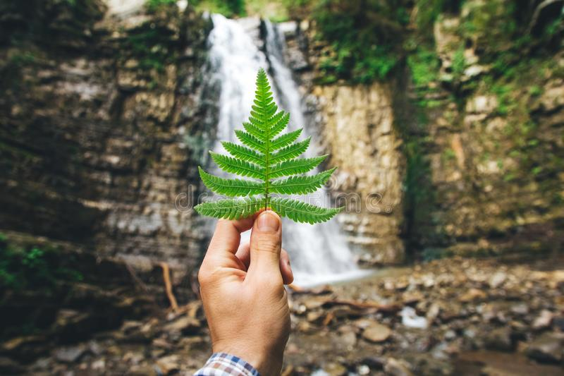 Green leaf of ferns in hand against a background of rocks and a waterfall.  stock photos