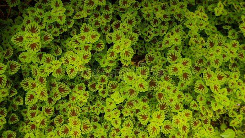 Green leaf fiber pattern patch royalty free stock photo