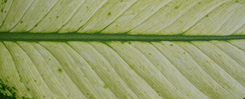 Green leaf fiber pattern patch stock photos