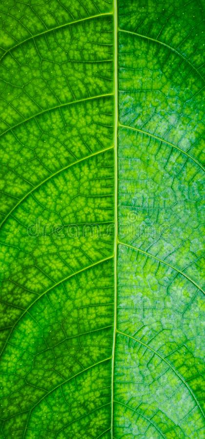 Green leaf fiber pattern patch royalty free stock photography
