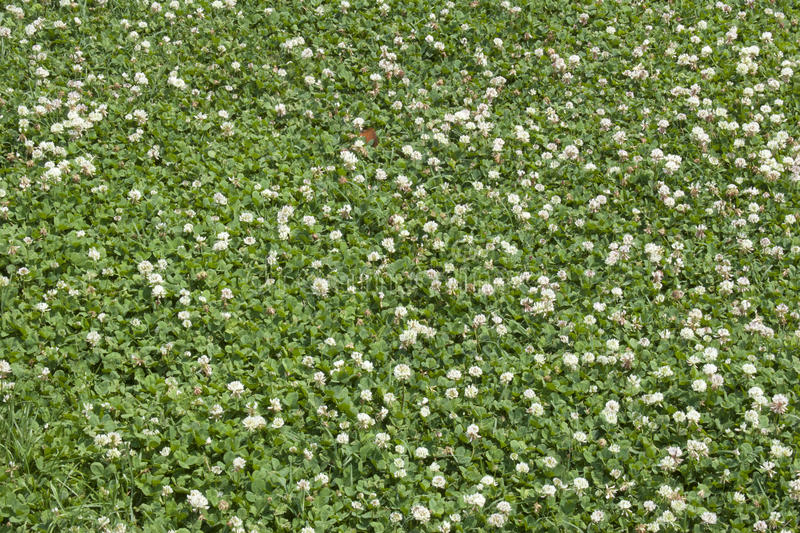 Download Green Leaf And Flower Background Stock Photo - Image: 41341366