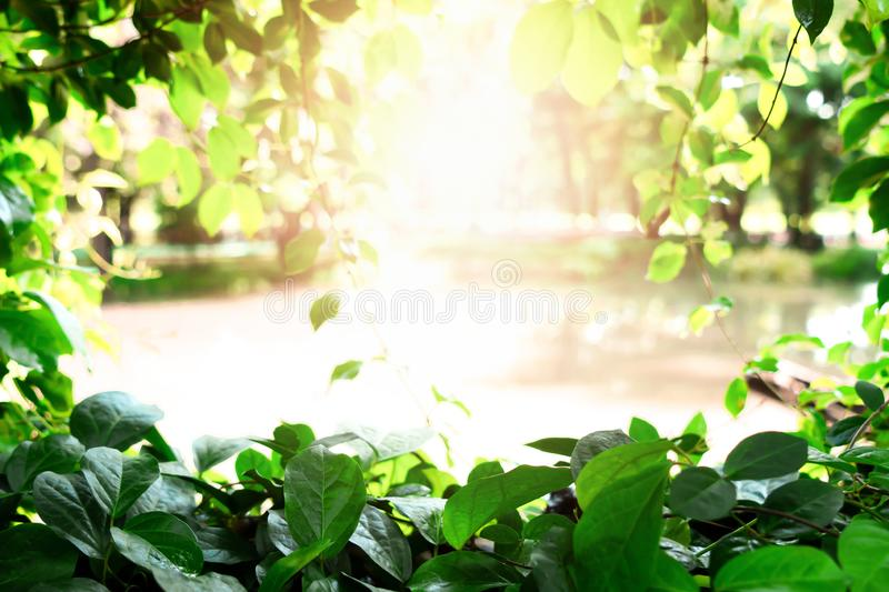 Green leaf frame with sunset. At public park.  Abstract for nature background concept royalty free stock photos