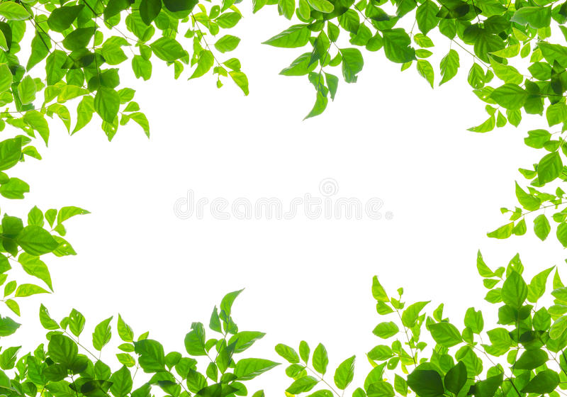Green leaf fream stock photography