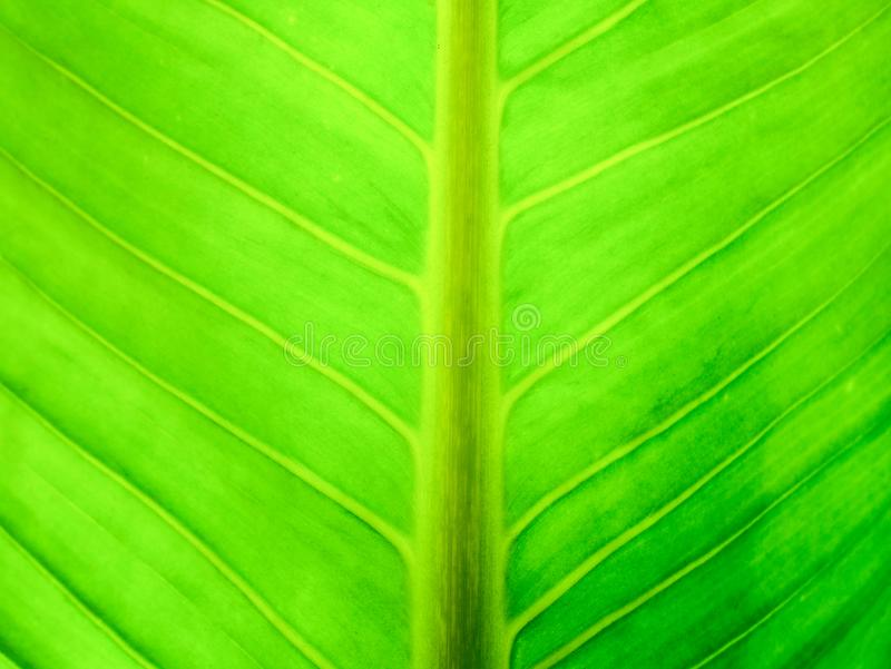Green leaf full frame picture royalty free stock images