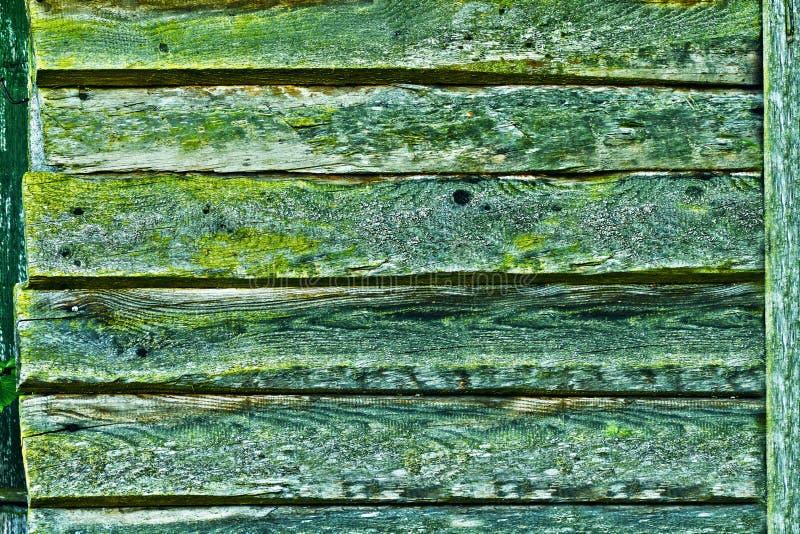 Green, Leaf, Grass, Wood stock photo