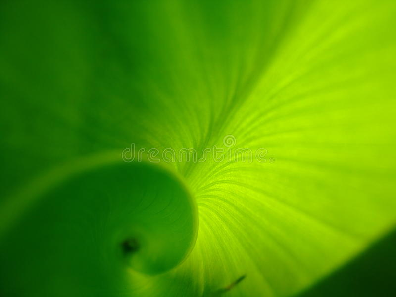 Download Green Leaf With Hints Of Sun Stock Image - Image: 15034659