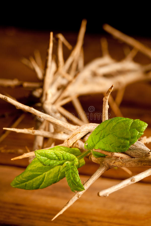 Download Green leaf of Hope stock photo. Image of crucification - 12356104