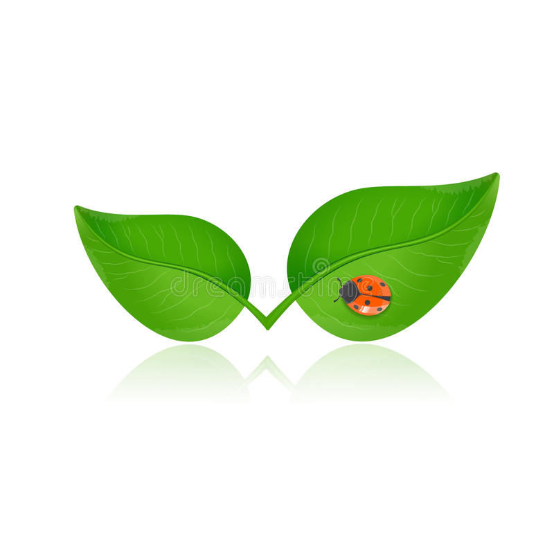 Green leaf with ladybird stock illustration