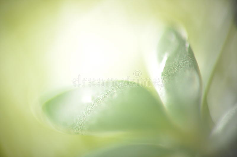 Green leaf macro. Macro of green leaf, abstract, sharp. Grean tonation, bright. It is a garden cress royalty free stock image
