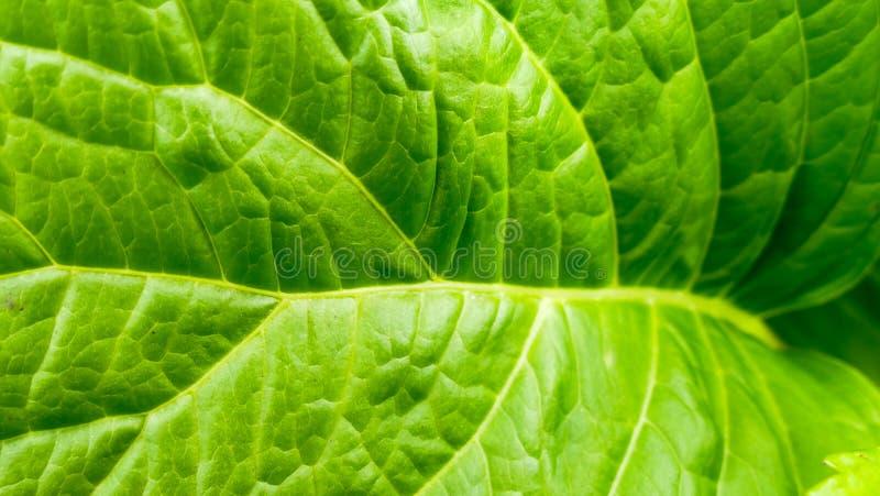 Green leaf macro background stock photo