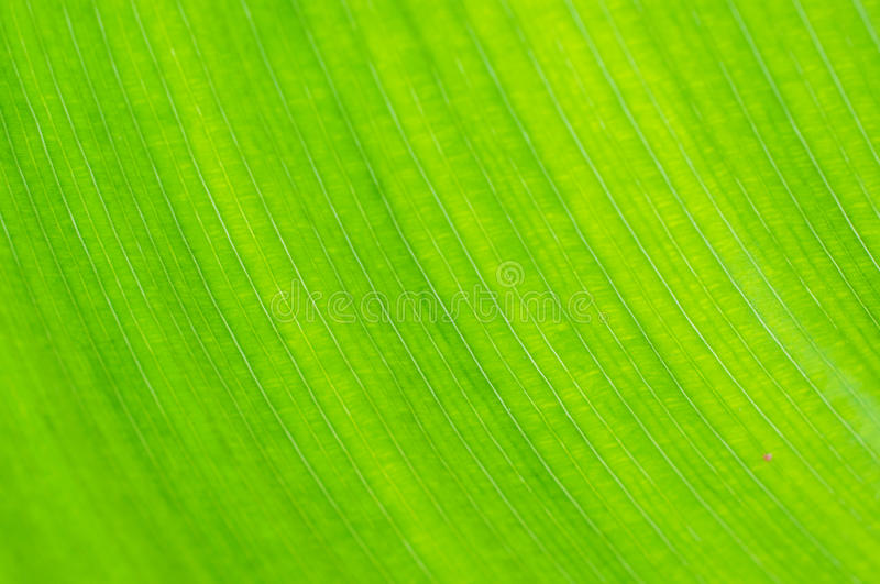Green leaf macro background stock photography