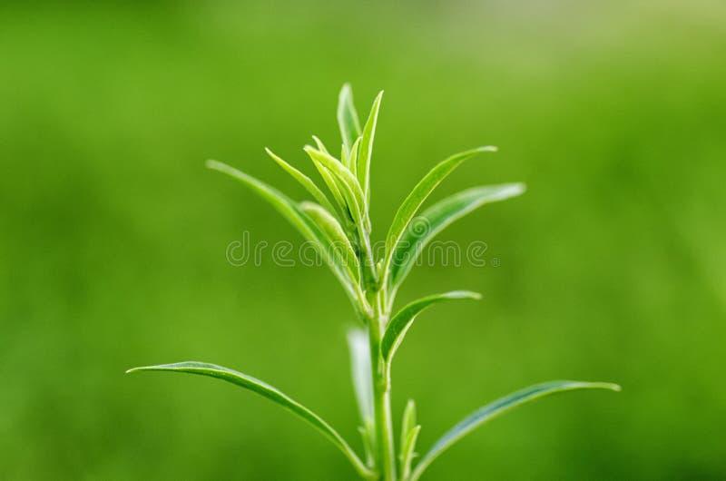 Green leaf macro closup stock images
