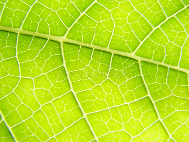 Green leaf macro lines royalty free stock photos
