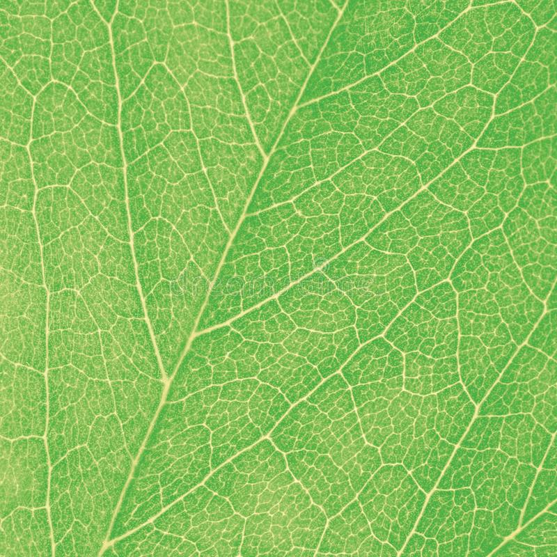 Green Leaf Macro Textured Closeup Large Detailed Abstract Background Texture Pattern Detail. Green Leaf Macro, Textured Closeup Large Detailed Abstract stock images