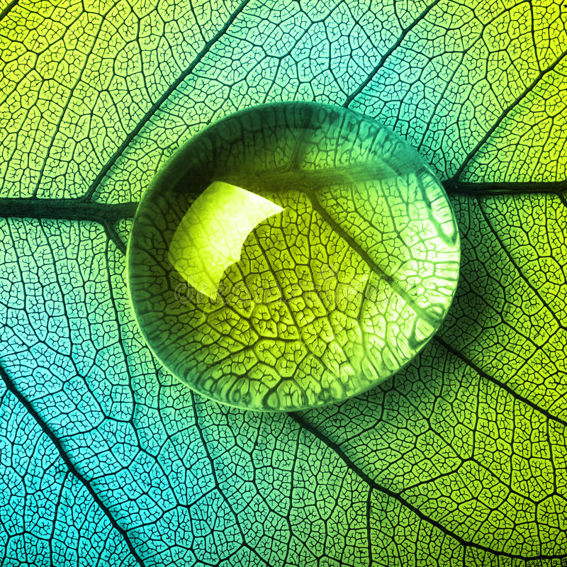 Free Green Leaf Macro With Drops Stock Photo - 51815640