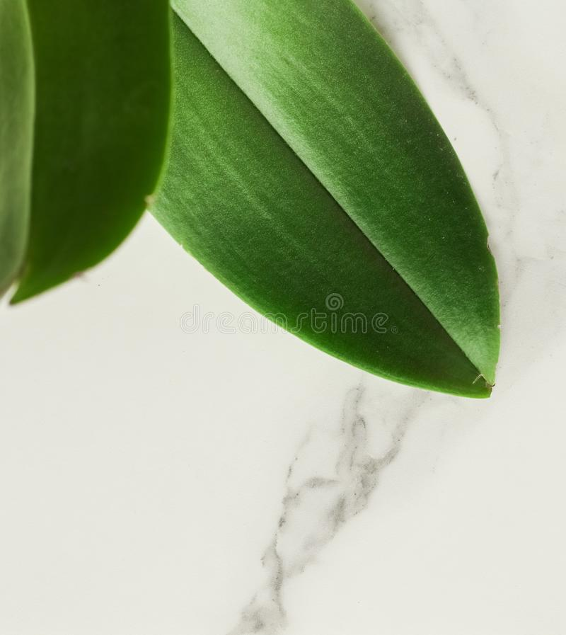 Eco-friendly way of life. Green leaf on marble, flatlay - luxury design background, sustainable products and environmental concept. Eco-friendly way of life royalty free stock photography