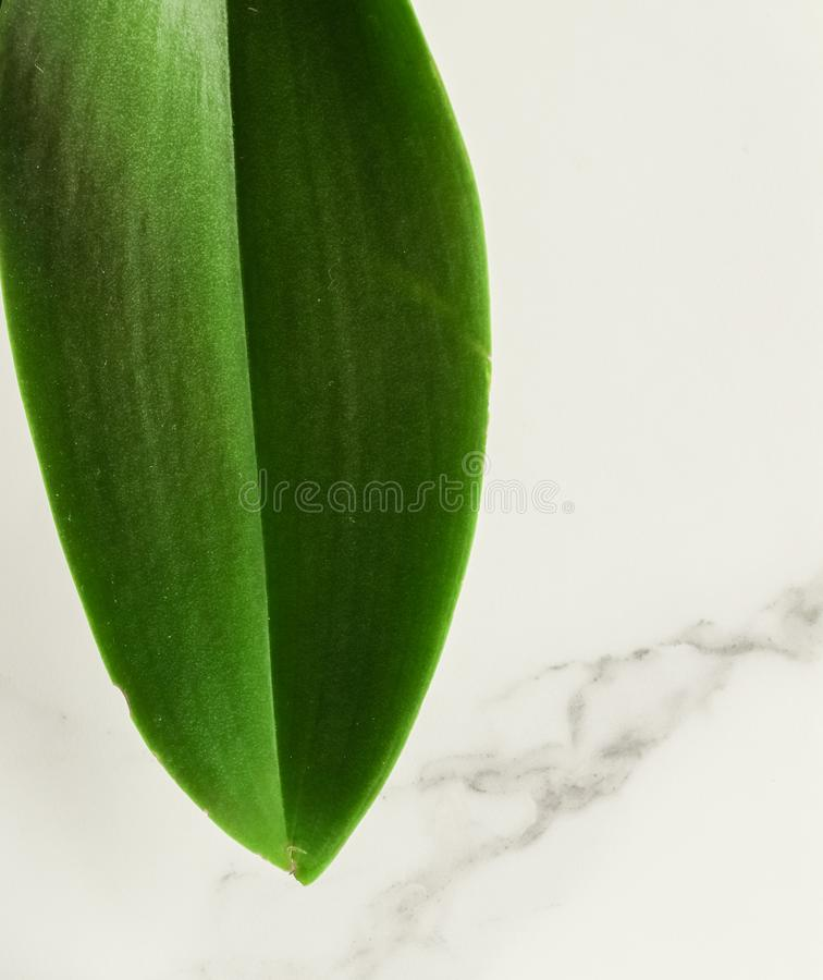 Eco-friendly way of life. Green leaf on marble, flatlay - luxury design background, sustainable products and environmental concept. Eco-friendly way of life royalty free stock photos