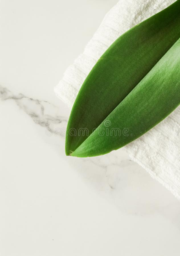 Eco-friendly way of life. Green leaf on marble, flatlay - luxury design background, sustainable products and environmental concept. Eco-friendly way of life stock image