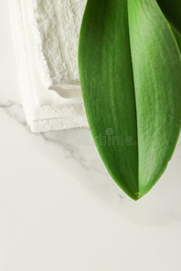 Eco-friendly way of life. Green leaf on marble, flatlay - luxury design background, sustainable products and environmental concept. Eco-friendly way of life royalty free stock images
