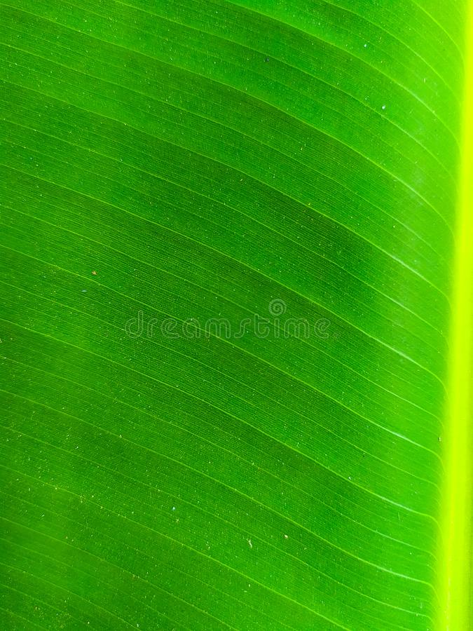 Green Leaf Mobile photography, hoping to get amazing images with a simple device stock photo