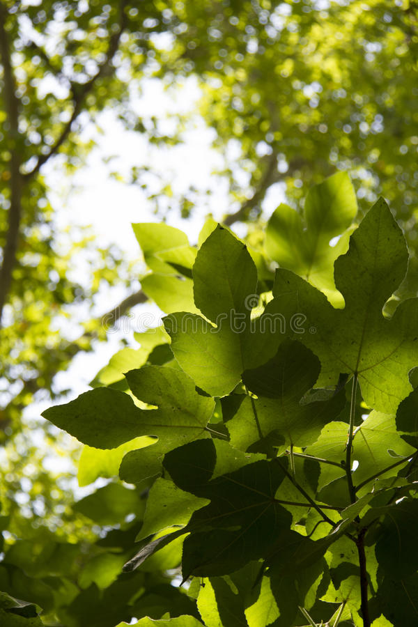 Download Green leaf in the morning stock photo. Image of green - 38728804
