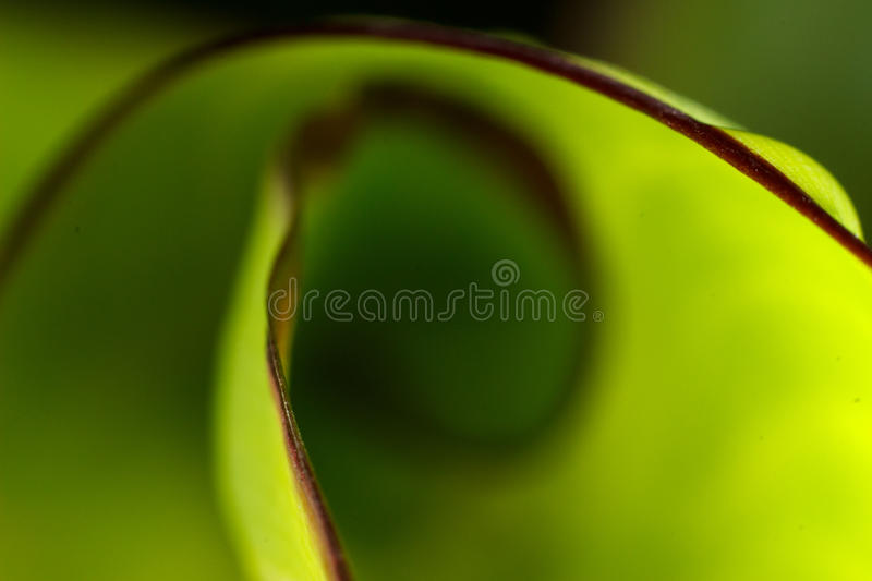 Green leaf nature background stock images