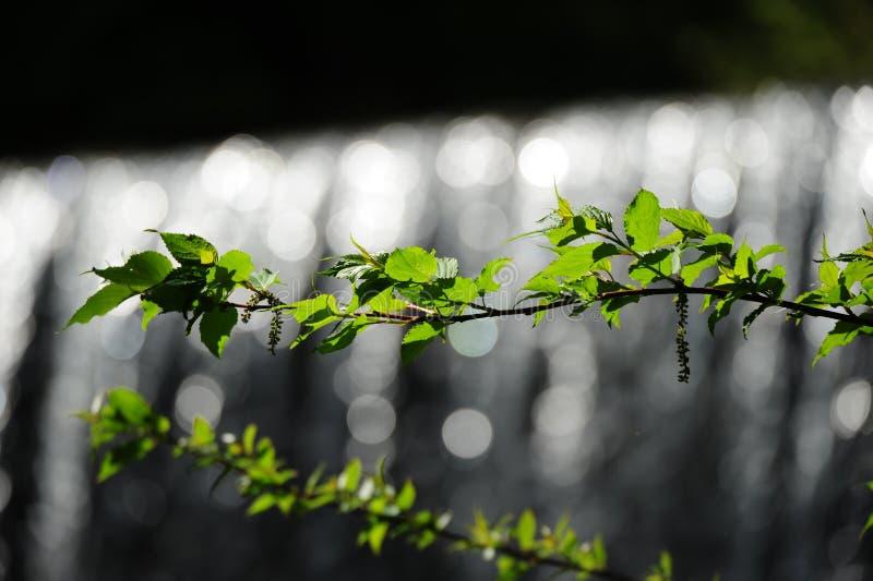 Green, Leaf, Nature, Branch Free Public Domain Cc0 Image