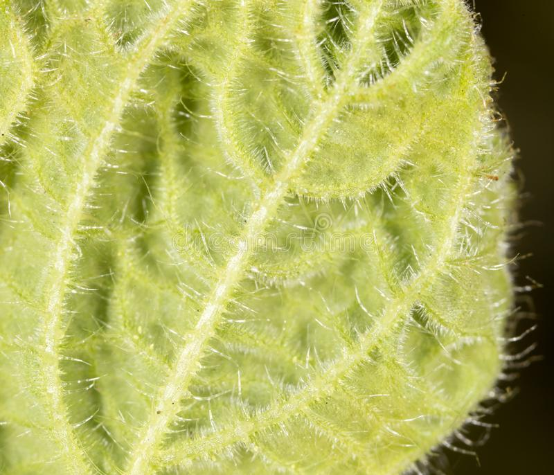 Green leaf in the nature. macro. In the park in nature stock photography