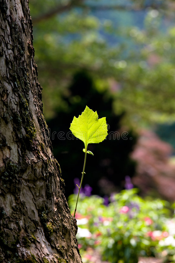 Free Green Leaf On A Tree Trunk Stock Image - 7429571