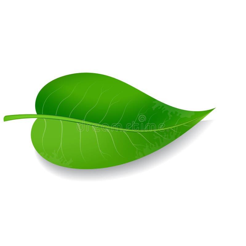 Free Green Leaf On White Background Stock Photo - 123300010