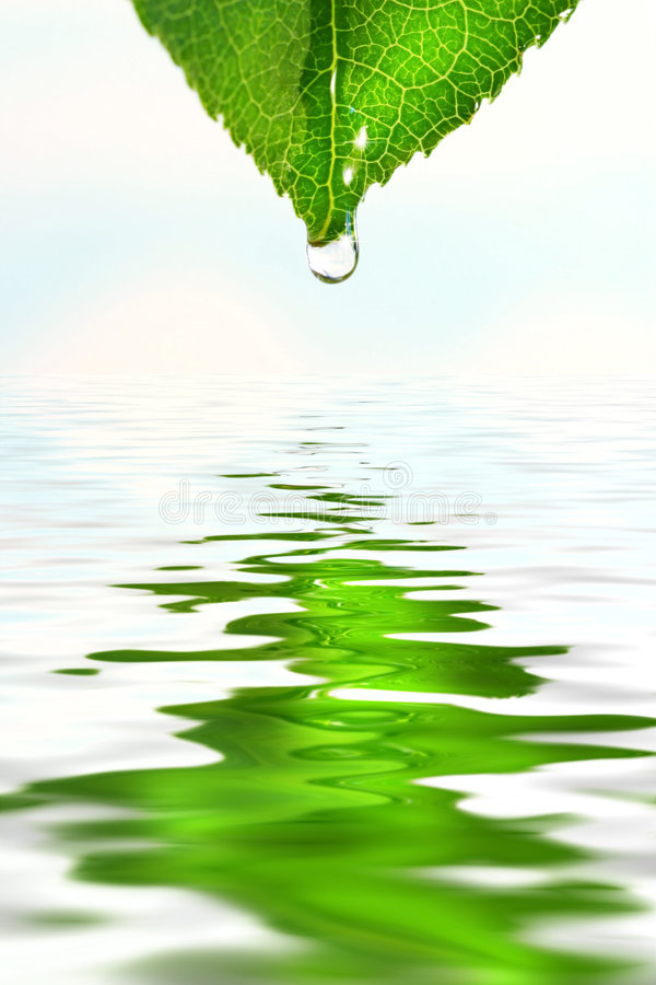 Green leaf over water reflection royalty free illustration