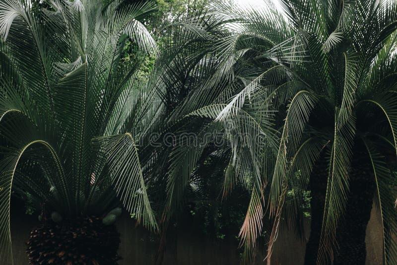 Green Leaf Palm Tree stock photos