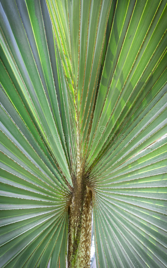 Download Green leaf palm tree stock image. Image of bright, growth - 39508289