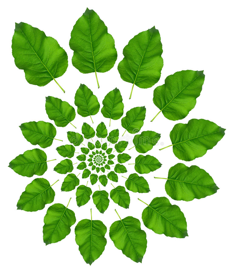 Green Leaf Pattern. On white background royalty free stock images