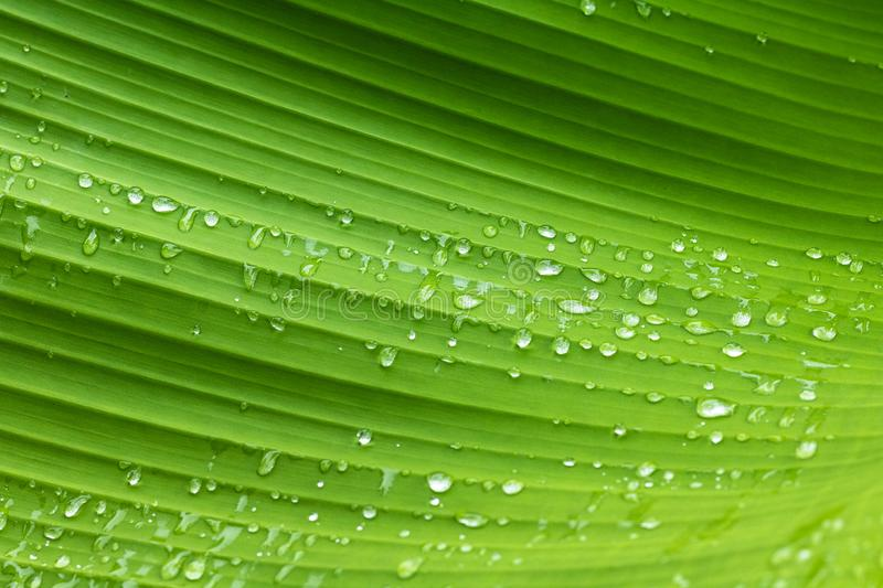 Green leaf pattern and dew with abstract line in nature background. Green nature background. royalty free stock images