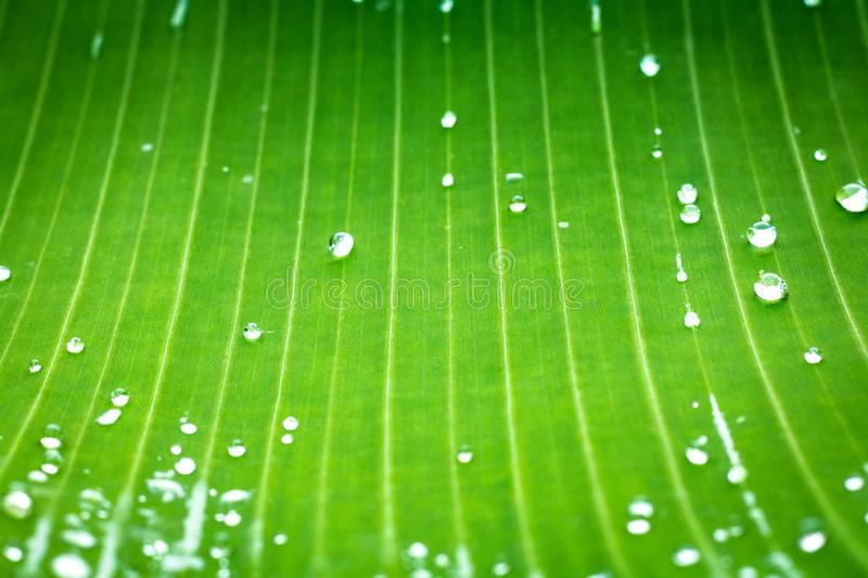 Green leaf pattern and dew with abstract line in nature background. stock photo