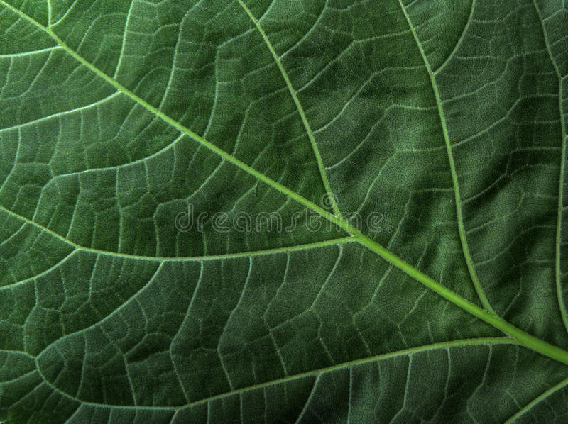 Green leaf pattern perfect backdrop royalty free stock image