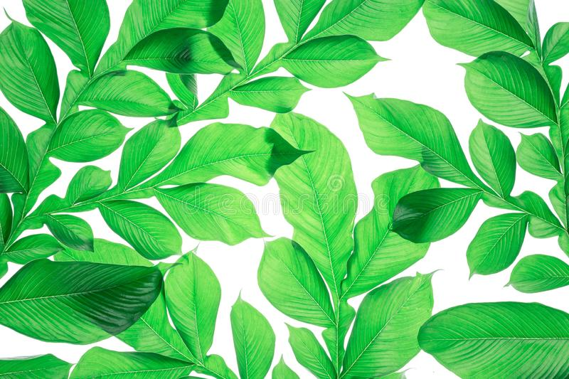 Green leaf pattern on the surface. Creative tropical green leave vector illustration