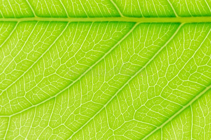 Green Leaf pattern texture background with light behind for website template, spring beauty, environment and ecology design. stock photos