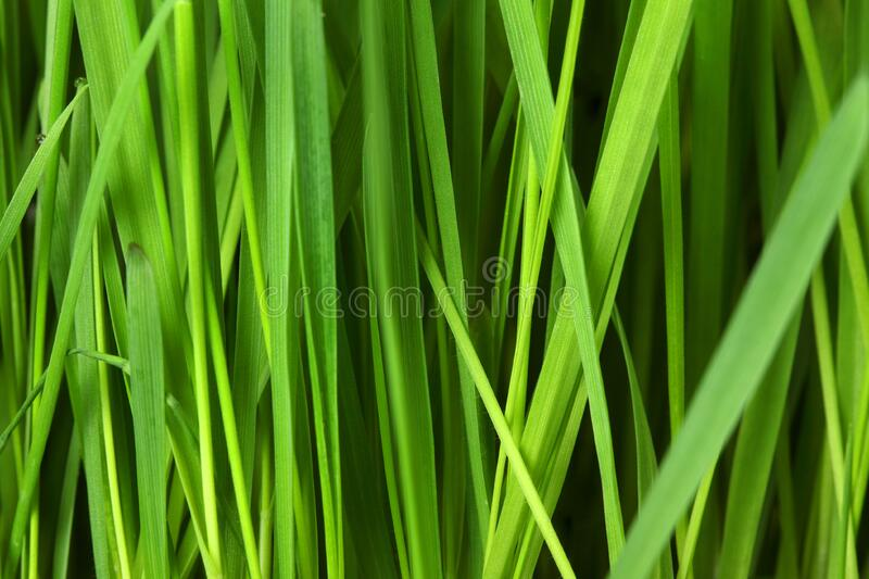 Green Leaf Plant royalty free stock image