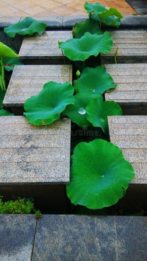 Green, Leaf, Plant, Aquatic Plant stock photo