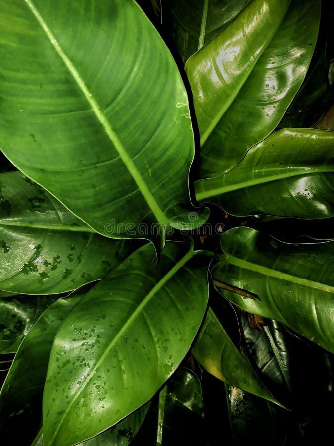 GREEN LEAF PLANT BACKGROUND stock image